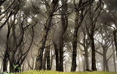 Forest of black trees